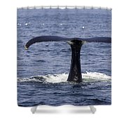 Humpback Whale Swimming Shower Curtain