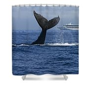 Humpback Whale Tail Lobbing Near Cruise Shower Curtain by Flip Nicklin