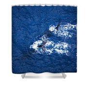Humpback Whales Aerial Shower Curtain