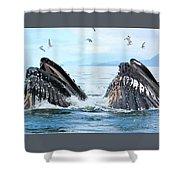 Humpback Whales In Juneau, Alaska Shower Curtain