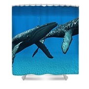 Humpback Whales Surfacing Shower Curtain