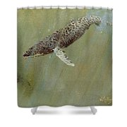 Humpbacks Shower Curtain