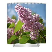Hungarian Lilac 4 Shower Curtain