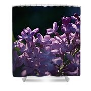 Hungarian Lilac 5 Shower Curtain
