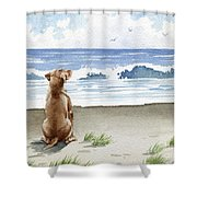Hungarian Vizsla At The Beach Shower Curtain