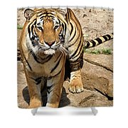 Hunger Tiger Shower Curtain