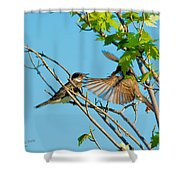 Hungry Birds In Tree Close-up Shower Curtain