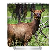 Hungry Elk Shower Curtain
