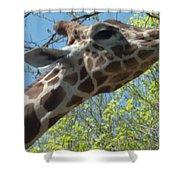 Hungry Giraffe Shower Curtain