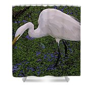 Hungry Great Egret Shower Curtain