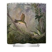 Hungry Hummers Shower Curtain