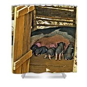 Hungry Piglets Shower Curtain