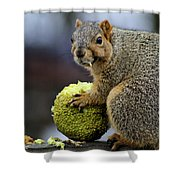 Hungry Squirrel 1 Shower Curtain