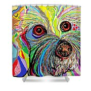 Hunter The Bichon . . . He's A Shoe Man Shower Curtain