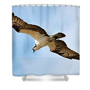 Hunter Osprey Shower Curtain