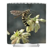 Hunter Wasp Shower Curtain