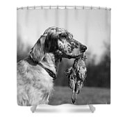 Hunting Dog With Quail, C.1920s Shower Curtain