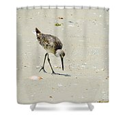 Hunting Plover Shower Curtain