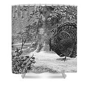 Hunting: Wild Turkey, 1886 Shower Curtain