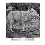 Hunting With Ears Back Black And White Shower Curtain