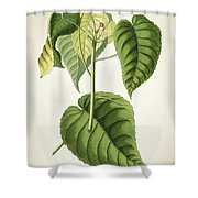 Hura Botanical Print Shower Curtain