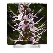 Hurricane Lilies Shower Curtain