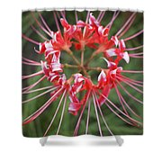 Hurricane Lily Shower Curtain