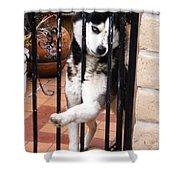 Husky Leo Focused Shower Curtain