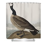 Hutchins's Barnacle Goose Shower Curtain