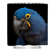 Hyacinth 363 On Black Square Shower Curtain