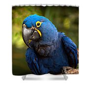 Hyacinth 363 Shower Curtain