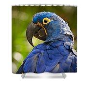 Hyacinth 458 Shower Curtain