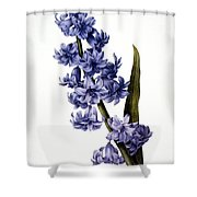 Hyacinth Shower Curtain by Granger