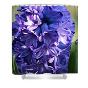 Hyacinth Highlights Shower Curtain
