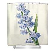 Hyacinth Shower Curtain