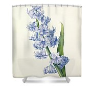 Hyacinth Shower Curtain by Pierre Joseph Redoute