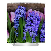 Hyacinths And Tulips II Shower Curtain