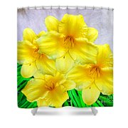 Hybrid Daffodils Shower Curtain