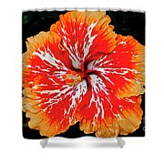 Hybrid Hibiscus II Maui Hawaii Shower Curtain