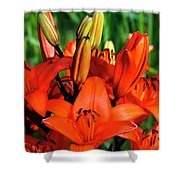Hybrid Lilies Shower Curtain