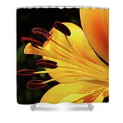 Hybrid Lily Shower Curtain