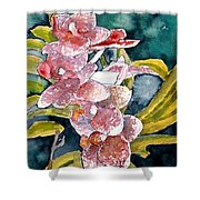 Hybrid Orchids Orchid Flowers Shower Curtain