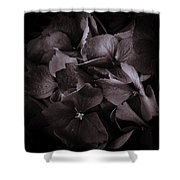 Hydra Head Shower Curtain by Rod Sterling