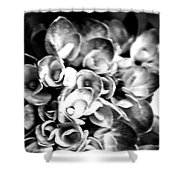 Hydrangas Bw Shower Curtain