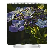 Hydrangea Color Shower Curtain