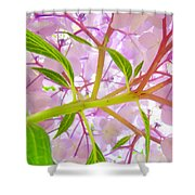 Hydrangea Flower Inside Floral Art Prints Baslee Troutman Shower Curtain