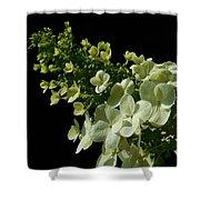 Hydrangea Formal Study Landscape Shower Curtain