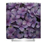 Hydrangea In Lavender 1 Shower Curtain