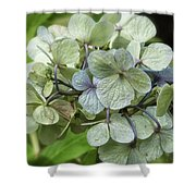 Hydrangea  In Purple And Pale Yellow Shower Curtain
