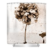 Hydrangea Interest Shower Curtain